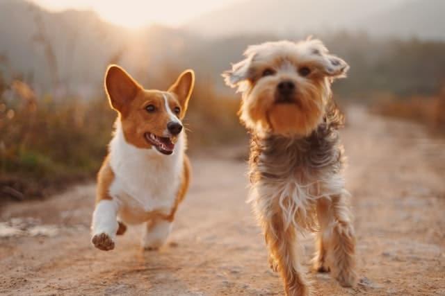 adn-canino-myadnlab-pruebas